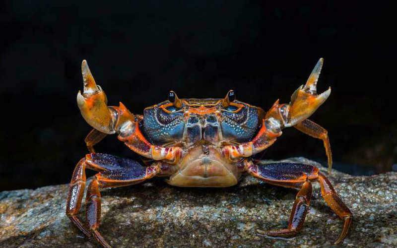 中國最好吃的螃蟹排行_中國十大名蟹排行榜