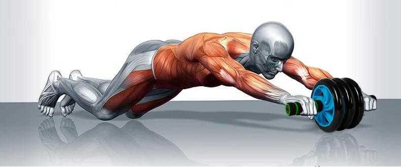 健腹轮的危害_健腹轮会造成腰肌劳损吗