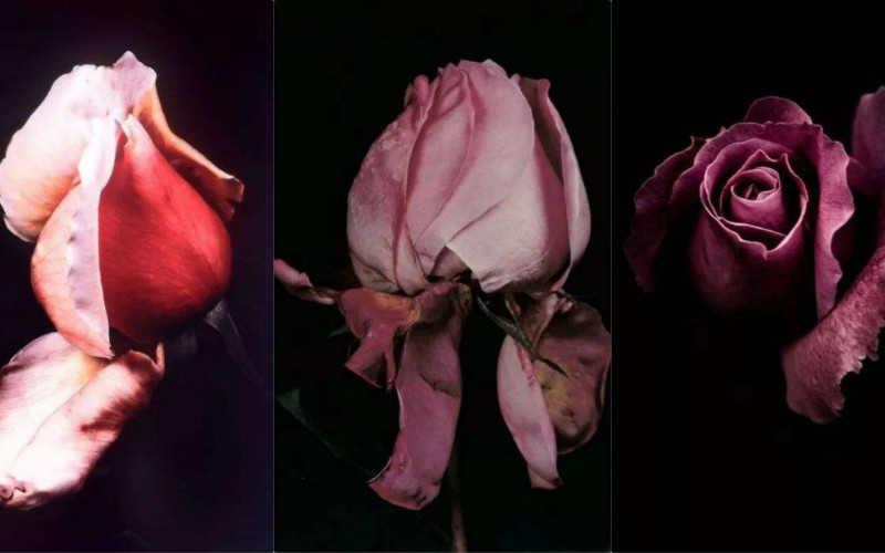 干枯玫瑰色口红推荐_干枯玫瑰色适合黄皮吗